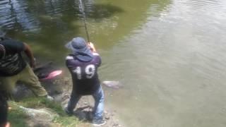 De pesca en el gaitero, cachama de 11.13 libras