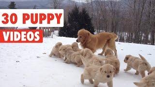 30 Puppy Videos Compilation 2016