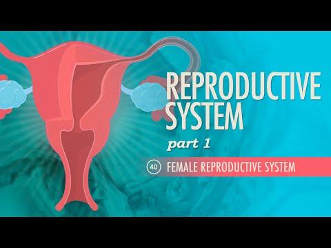 Xxx Mp4 Reproductive System Part 1 Female Reproductive System Crash Course A Amp P 40 3gp Sex
