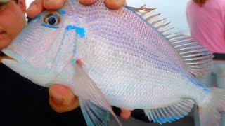 Deep Sea Fishing For Beautiful Tropical Fish!!! -(Gulf Of Mexico)