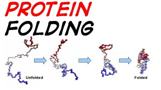 Protein folding mechanism and simulation