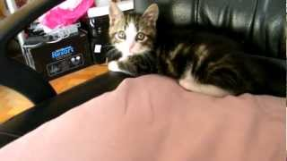 My kitty cat! Meet Cookie!