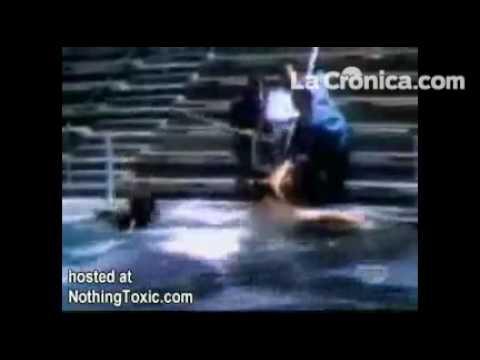 Dawn Brancheau asesinada por orca en Sea World