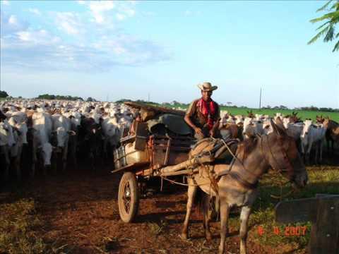 comitiva com 1200 vacas no estradao