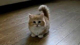 مقااطع قطط مضحكة راح تموت من الضحك #3