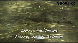Living the Dream - Fishing the Chalkstream - Fly Fishing Big Trout, small stream