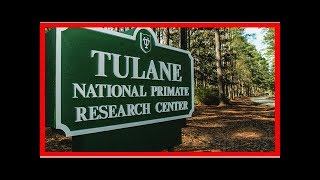 Escape of dangerous bacterium leads to halt of risky studies at tulane