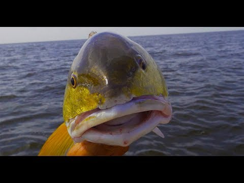 Xxx Mp4 BULL RED Catch Clean Cook Bar B Q Redfish On The HALF SHELL 3gp Sex