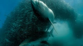 Documentaries about nature Planet Ocean BBC Best documentary HD 2017