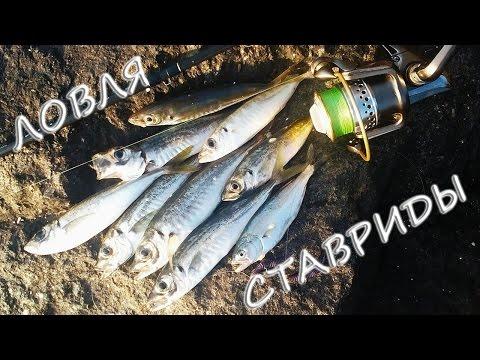 как и на что ловить ставриду в черном море