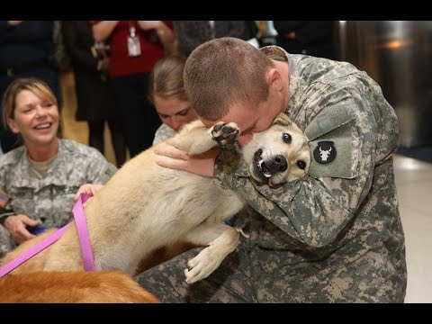 Dogs Welcoming Soldiers Home Compilation 2013