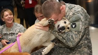 Dogs Welcoming Soldiers Home Compilation (2012)