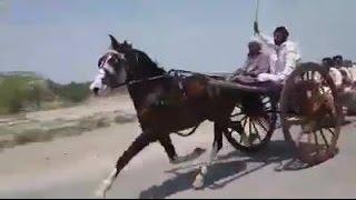 Jandohla Horse VS Makro Horse Tanga Race Sukkar Sindh 5 KM.11/04/2017