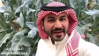 سعودي يحول سطح بيته الى مزرعة بواسطة الزراعة المائية !!   الاحساء لايف