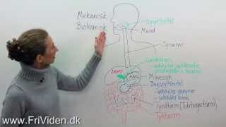Biologi: Fordøjelsessystemet