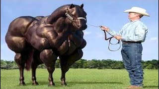 Mutant Horse Power Mating Breeding Foal Playing Training with Cows and Bulls Competitions Pony #ALN