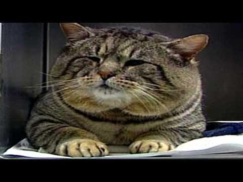 Fat Cat Song