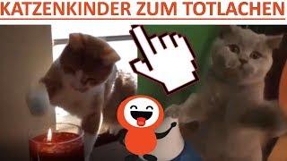 LUSTIGE KATZENKINDER ZUM TOTLACHEN   KATZENVIDEOS   LUSTIGE VIDEOS