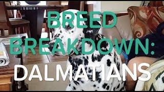 BREED BREAKDOWN: DALMATIANS 🐶