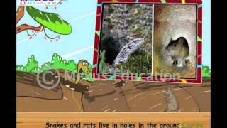 Kids Science - Learn about the Animals and their Homes