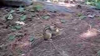 Funny Chipmunk