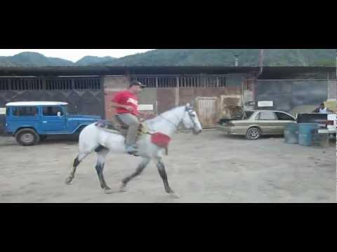 coleo de toros Guatire entrenamiento caballo de coleo