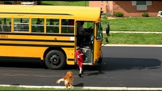 Cute Dogs Waiting And Welcoming Kids Going Home On The School  - Funny Dog Videos Compilation 2016