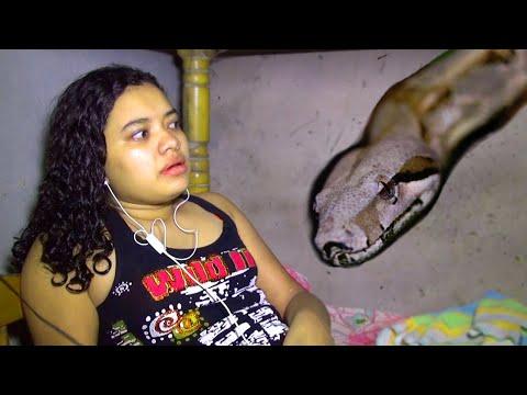 GIANT SNAKE INVADES GIRL'S BEDROOM