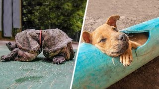 8 Animals That Got Into Trouble Because of Humans