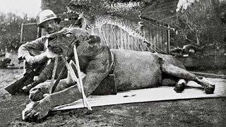 The Man-Eaters Of Tsavo - Full Documentary