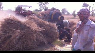 Massay 385 with wheat thresher 2017 must watch