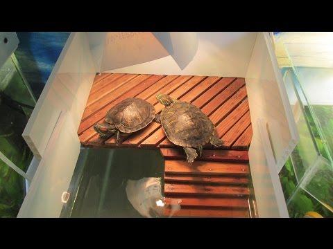 Как сделать островок для черепах своими руками