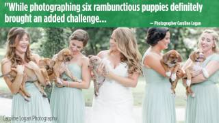 Rescue puppies join bridal party for adorable photo shoot