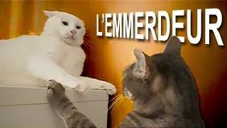 L'EMMERDEUR - PAROLE DE CHAT