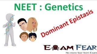 NEET Biology Genetics : Dominant Epistasis