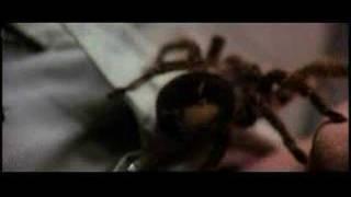The Beyond: Spider Scene