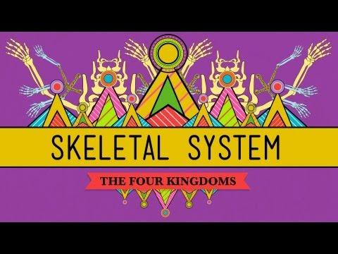 Xxx Mp4 The Skeletal System It S ALIVE CrashCourse Biology 30 3gp Sex