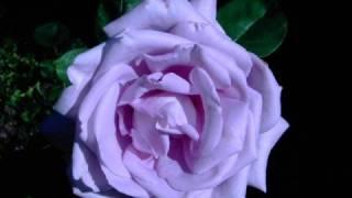 the guru josh prject - infinity 2008 (klaas vocal edit)