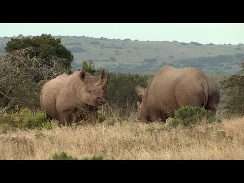 Namibia's Black Rhino: Their last Wild Retreat