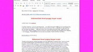 pups4sale.com.au security tips for puppy sellers - video 2