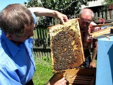 Pszczoły Pana W.