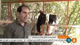 Iran Wild Birds treatment, Mr. Bozorg-Zadeh, Qom province آقاي بزرگزاده درمان پرندگان وحشي قم ايران