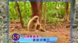 Monkey with a death wish!
