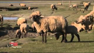 Les saveurs de l'agneau - Les carnets de Julie