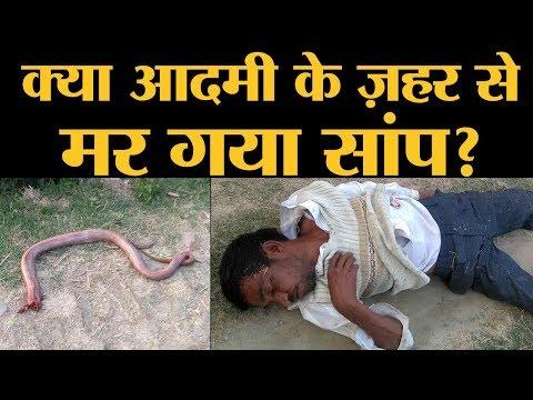 Xxx Mp4 आदमी के काटने से सांप के मरने वाली खबर की सच्चाई ये है Hardoi Snake Bite The Lallantop 3gp Sex