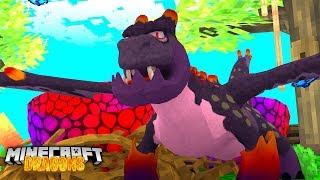 VOLCANO BABY DRAGON EGG HATCHES! - Minecraft Dragons