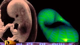 Purge - Phenotype (1995) [60fps]