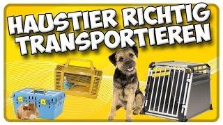 Transport von Hund, Katze und Kleintieren im Auto! So transportiere ich mein Haustier richtig!