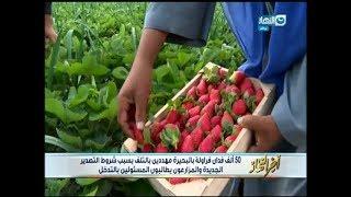 أخر النهار - 50 الف فدان فراولة بالبحيرة مهددين بالتلف بسبب شروط التصدير الجديدة
