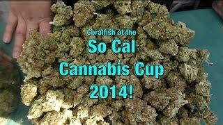 So Cal Cannabis Cup 2014